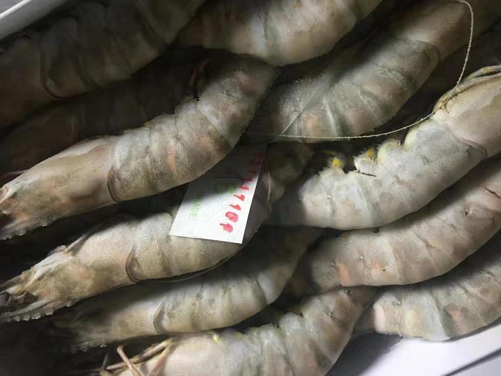 黑虎虾等冻品一批威廉希尔投注公告